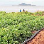 El campo ve las enmiendas del Mar Menor como un «daño irreversible»