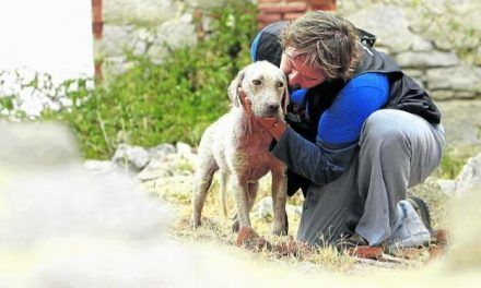 Un veterinario revela lo que siente un perro justo antes de morir