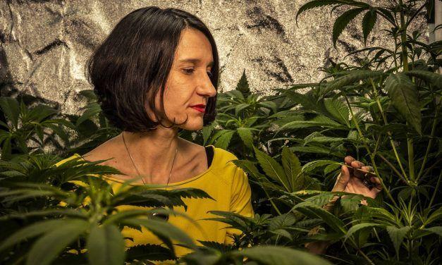 Cannabis, el negocio millonario que apunta a convertirse en el pelotazo del siglo