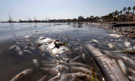 Las terribles imágenes de los 3.000 kilos de peces muertos en el Mar Menor