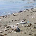 Ocho asesores científicos del Gobierno de Murcia dimiten por la «manipulación» en la crisis del Mar Menor