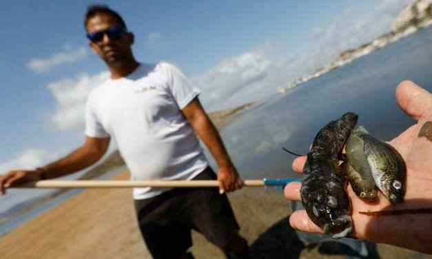 Cuatro soluciones y media para el Mar Menor