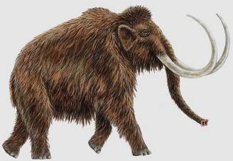 Golpe en Cartagena y Librilla al tráfico ilegal de marfil de mamut y antigüedades