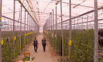 Marihuana con denominación de origen de Almería